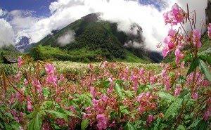 bunga, himalaya, lembah